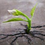 La Resilienza, forza d'animo e flessibilità